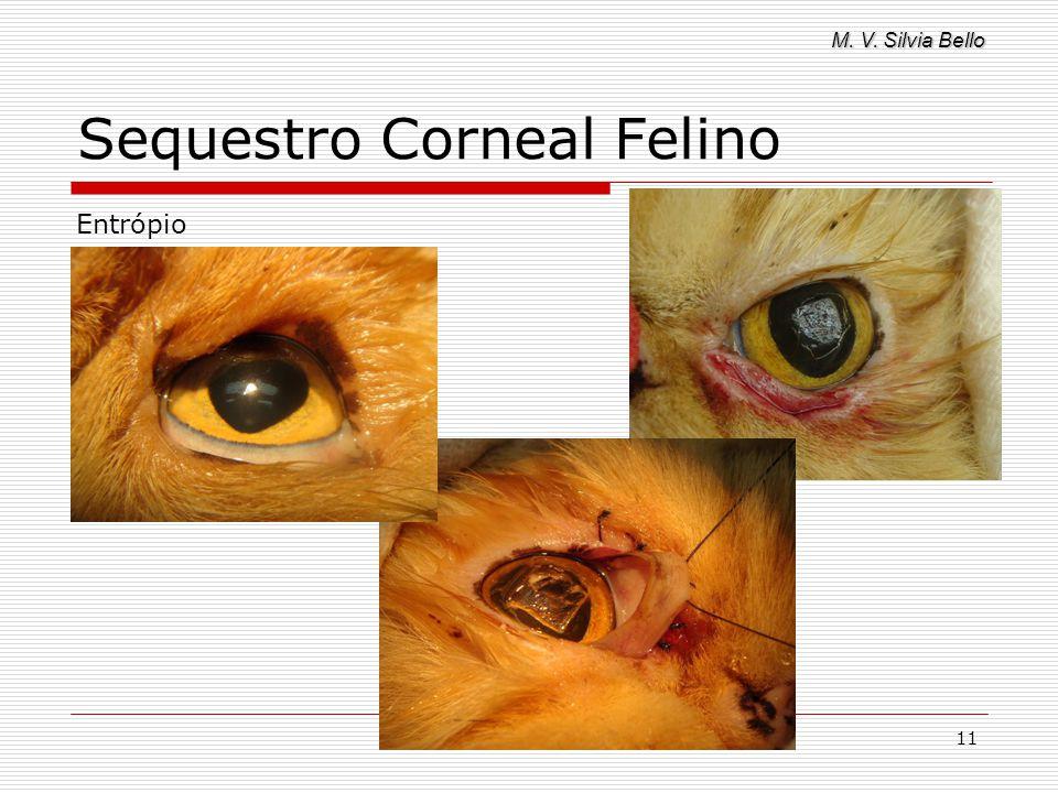 M. V. Silvia Bello 11 Sequestro Corneal Felino Entrópio