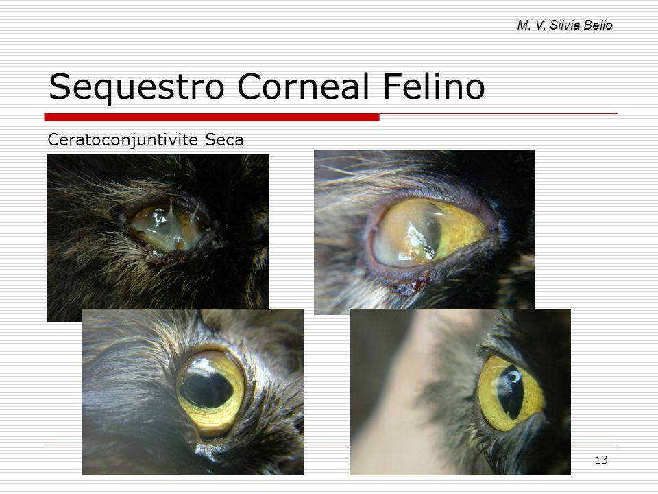 M. V. Silvia Bello 13 Sequestro Corneal Felino Ceratoconjuntivite Seca