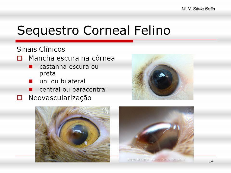 M. V. Silvia Bello 14 Sequestro Corneal Felino Sinais Clínicos Mancha escura na córnea castanha escura ou preta uni ou bilateral central ou paracentra