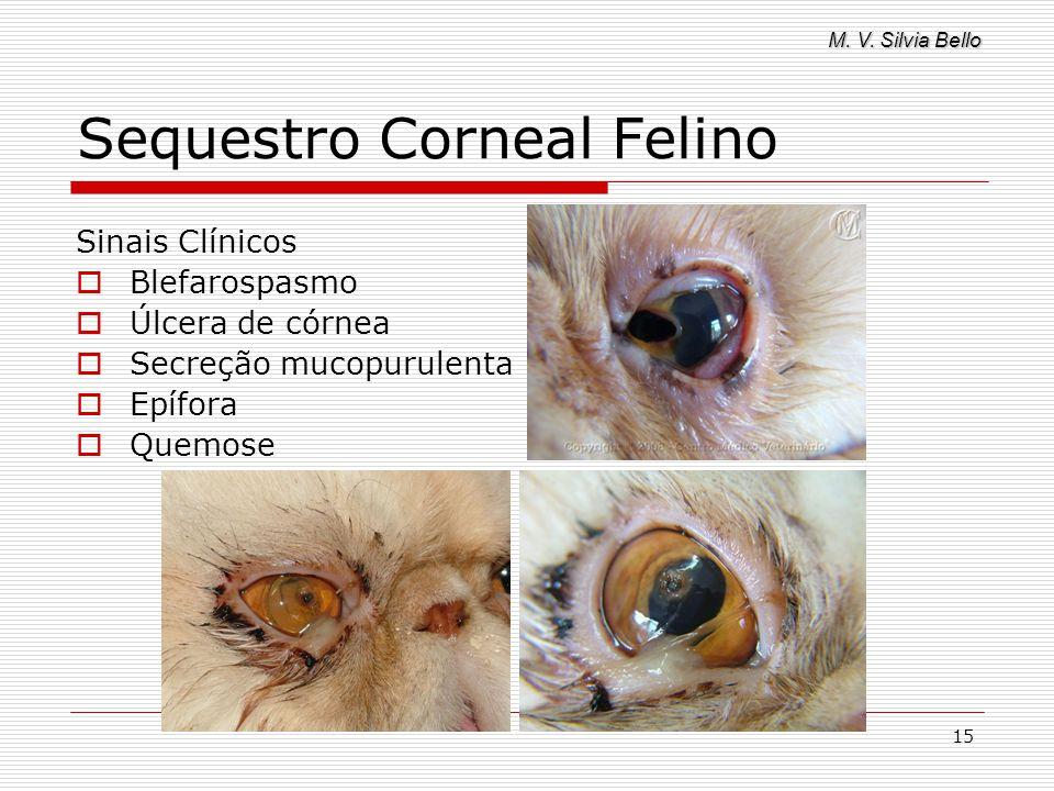 M. V. Silvia Bello 15 Sequestro Corneal Felino Sinais Clínicos Blefarospasmo Úlcera de córnea Secreção mucopurulenta Epífora Quemose