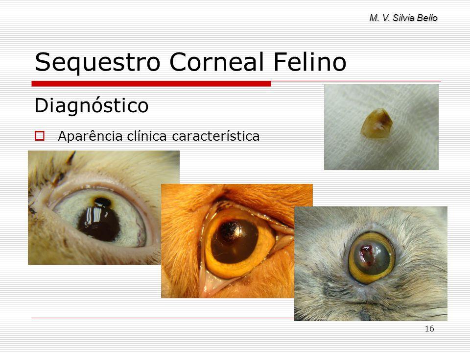M. V. Silvia Bello 16 Sequestro Corneal Felino Diagnóstico Aparência clínica característica