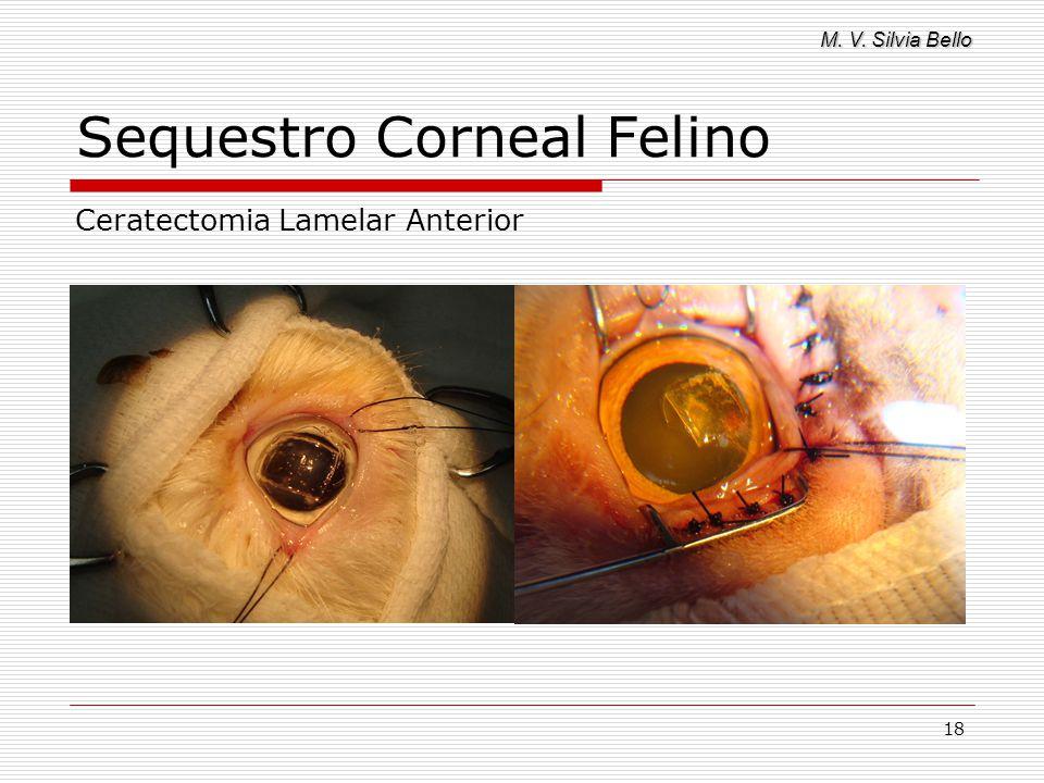M. V. Silvia Bello 18 Sequestro Corneal Felino Ceratectomia Lamelar Anterior
