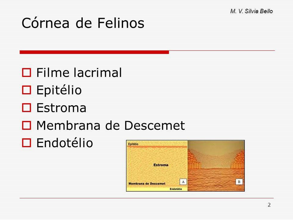 M. V. Silvia Bello 2 Córnea de Felinos Filme lacrimal Epitélio Estroma Membrana de Descemet Endotélio