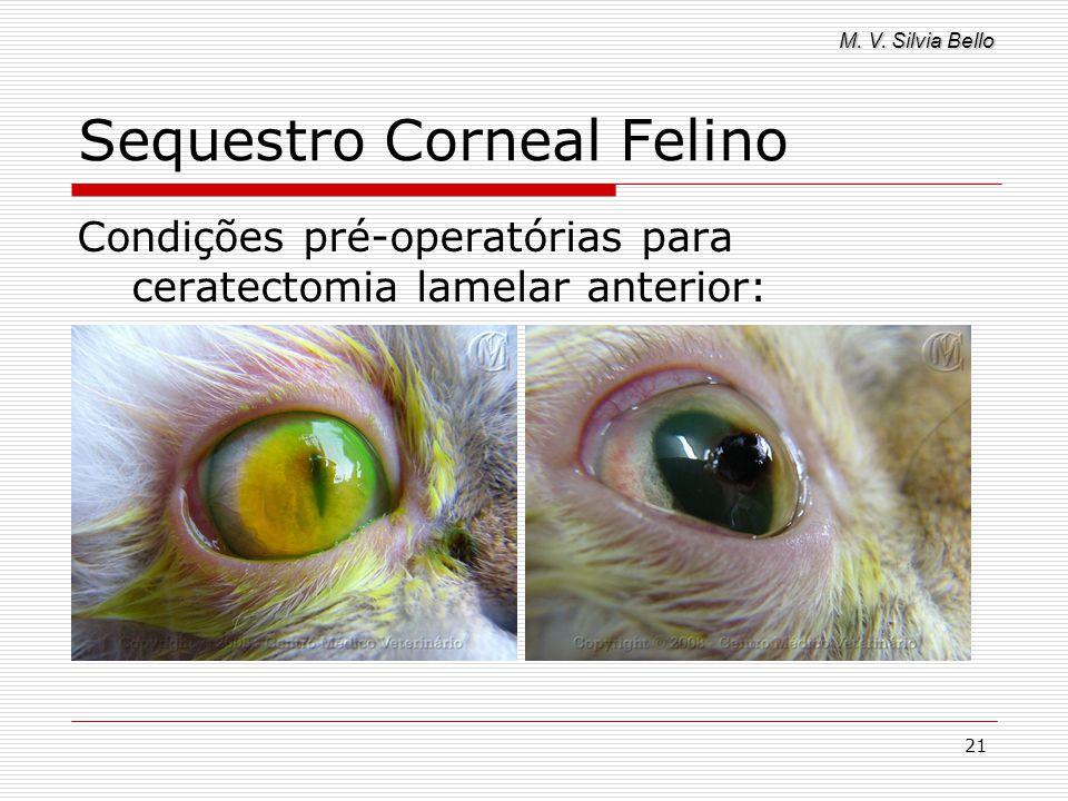 M. V. Silvia Bello 21 Sequestro Corneal Felino Condições pré-operatórias para ceratectomia lamelar anterior: