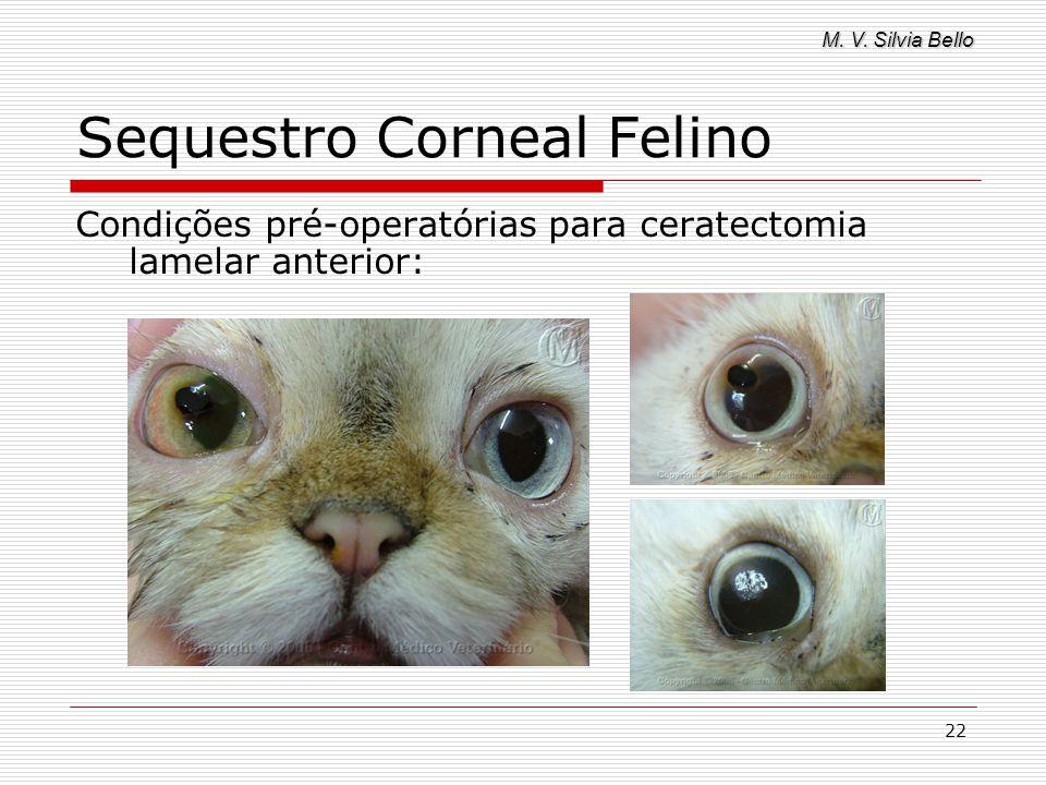 M. V. Silvia Bello 22 Sequestro Corneal Felino Condições pré-operatórias para ceratectomia lamelar anterior: