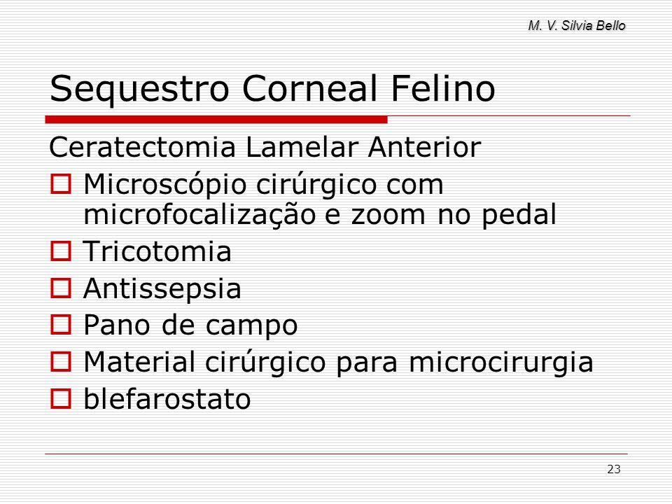 M. V. Silvia Bello 23 Sequestro Corneal Felino Ceratectomia Lamelar Anterior Microscópio cirúrgico com microfocalização e zoom no pedal Tricotomia Ant