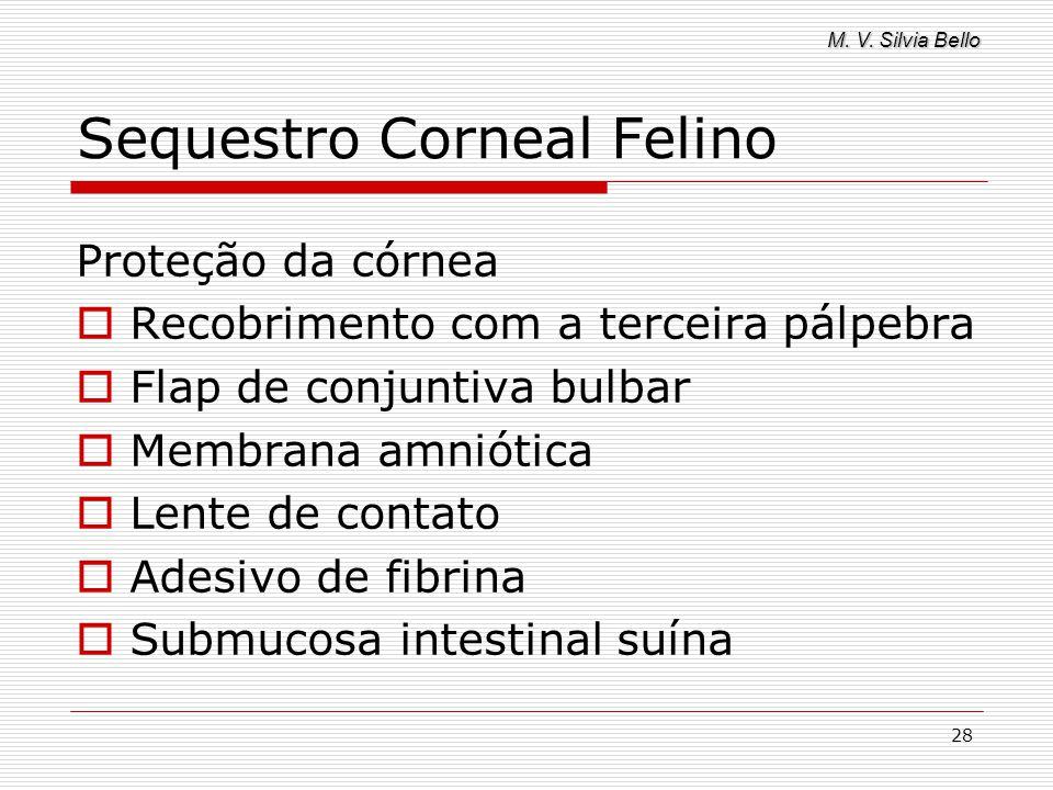 M. V. Silvia Bello 28 Sequestro Corneal Felino Proteção da córnea Recobrimento com a terceira pálpebra Flap de conjuntiva bulbar Membrana amniótica Le