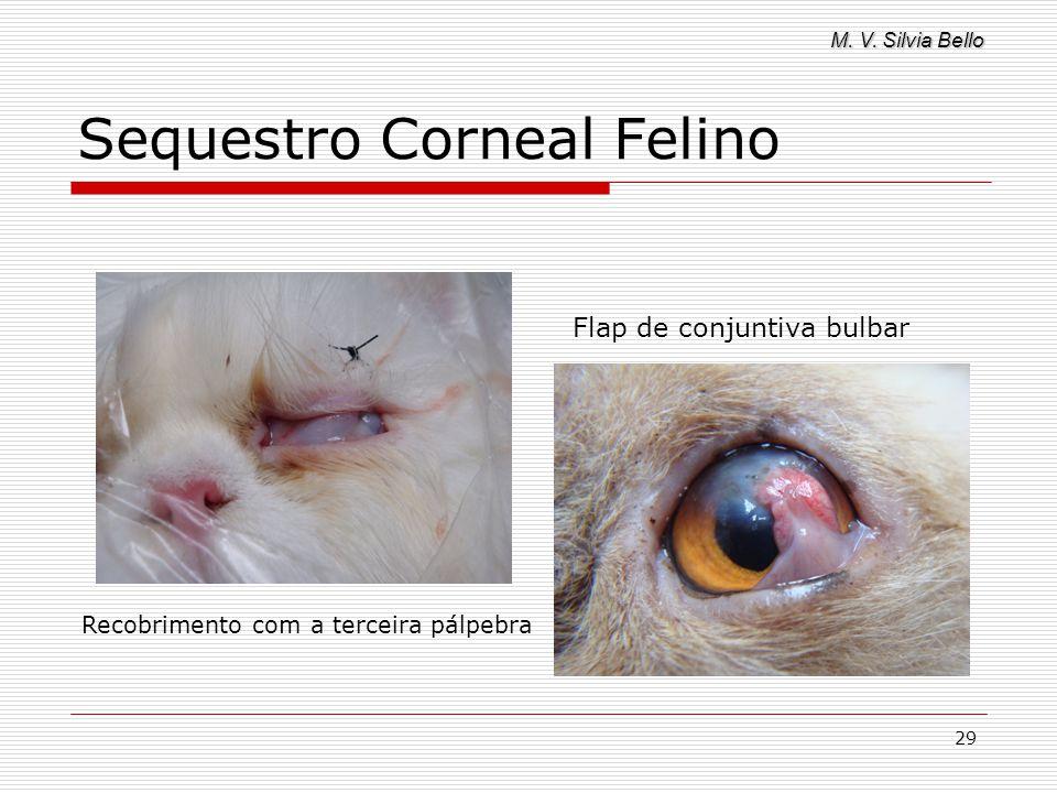M. V. Silvia Bello 29 Sequestro Corneal Felino Recobrimento com a terceira pálpebra Flap de conjuntiva bulbar