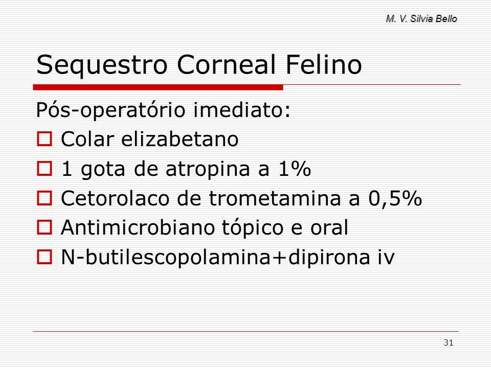 M. V. Silvia Bello 31 Sequestro Corneal Felino Pós-operatório imediato: Colar elizabetano 1 gota de atropina a 1% Cetorolaco de trometamina a 0,5% Ant