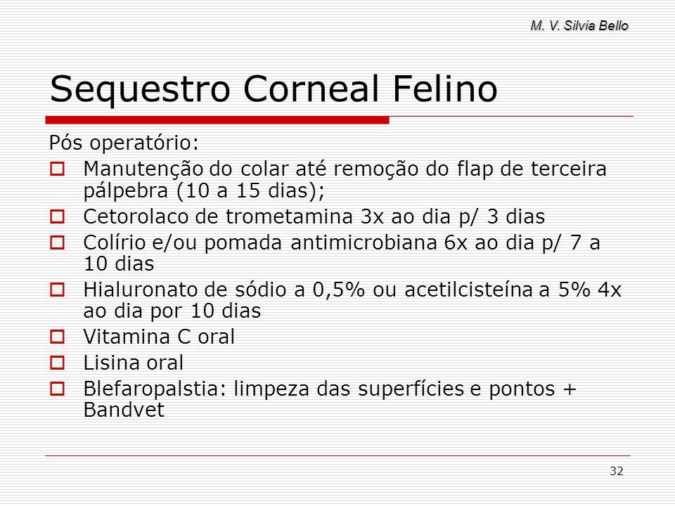 M. V. Silvia Bello 32 Sequestro Corneal Felino Pós operatório: Manutenção do colar até remoção do flap de terceira pálpebra (10 a 15 dias); Cetorolaco