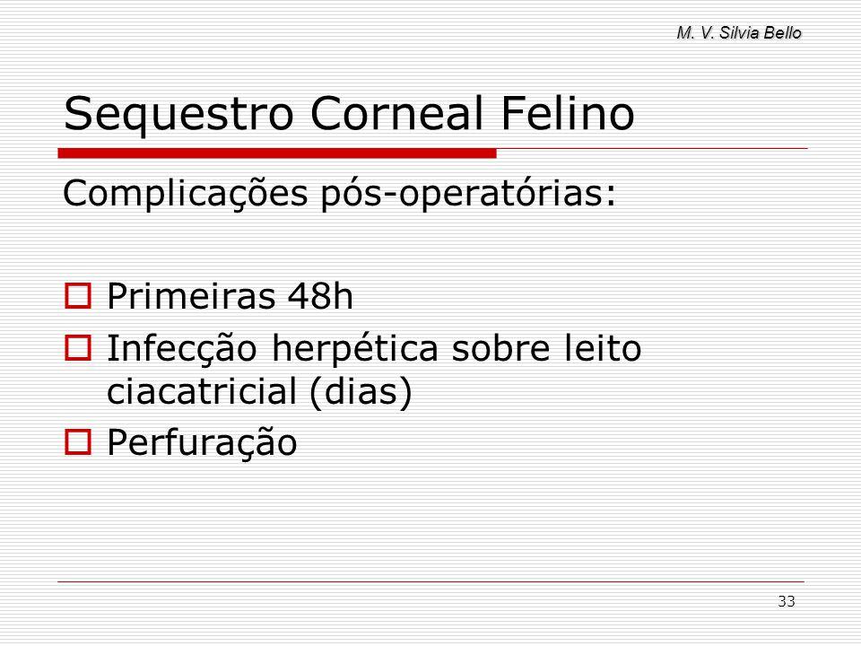 M. V. Silvia Bello 33 Sequestro Corneal Felino Complicações pós-operatórias: Primeiras 48h Infecção herpética sobre leito ciacatricial (dias) Perfuraç