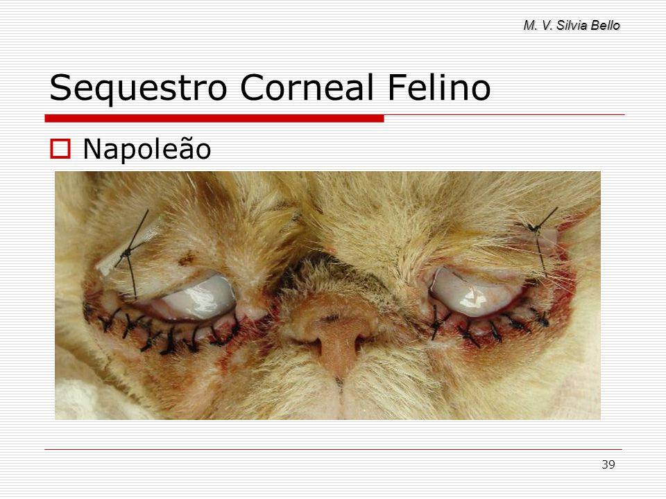 M. V. Silvia Bello 39 Sequestro Corneal Felino Napoleão