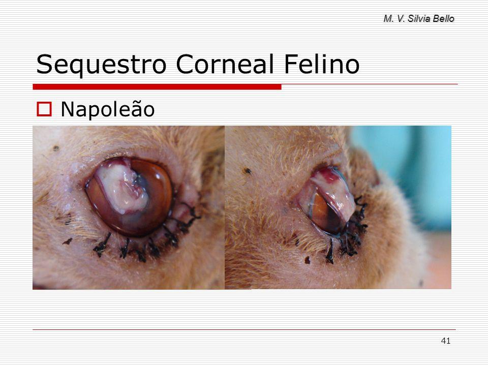 M. V. Silvia Bello 41 Sequestro Corneal Felino Napoleão