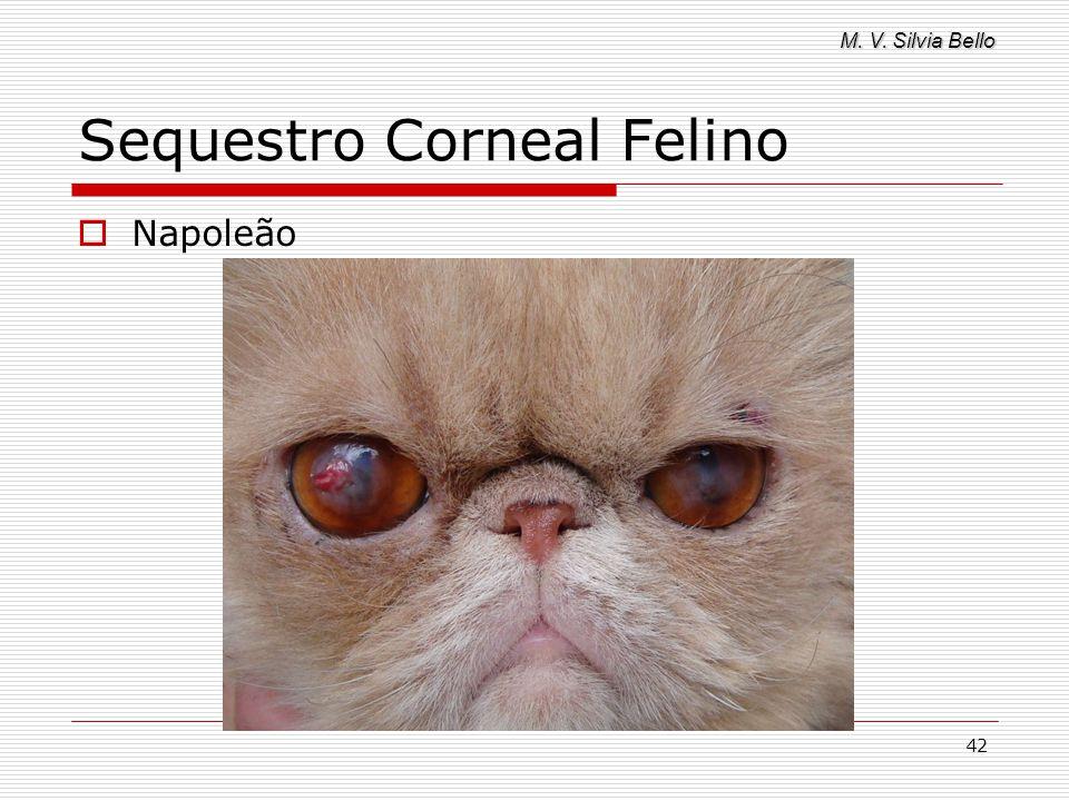 M. V. Silvia Bello 42 Sequestro Corneal Felino Napoleão
