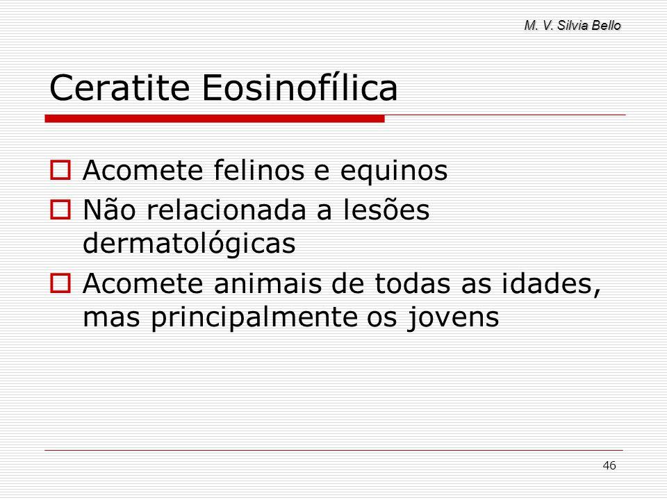 M. V. Silvia Bello 46 Ceratite Eosinofílica Acomete felinos e equinos Não relacionada a lesões dermatológicas Acomete animais de todas as idades, mas