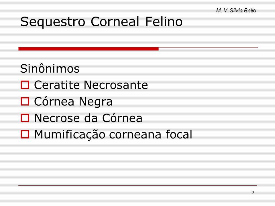 M. V. Silvia Bello 5 Sequestro Corneal Felino Sinônimos Ceratite Necrosante Córnea Negra Necrose da Córnea Mumificação corneana focal