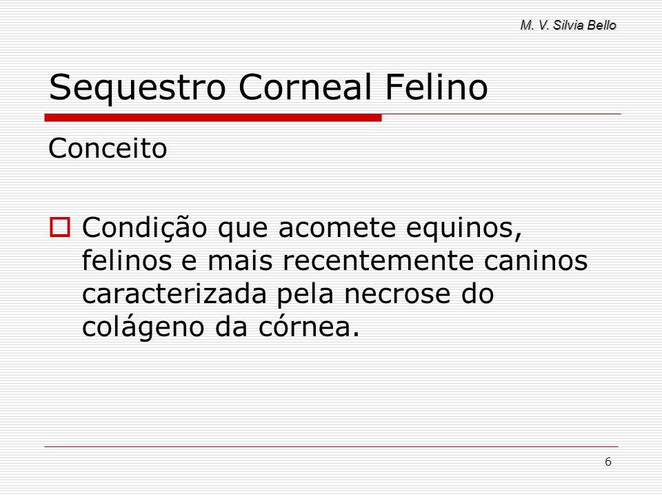 M. V. Silvia Bello 6 Sequestro Corneal Felino Conceito Condição que acomete equinos, felinos e mais recentemente caninos caracterizada pela necrose do