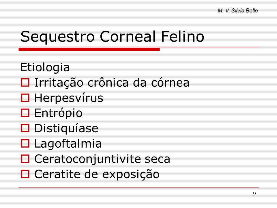 M. V. Silvia Bello 9 Sequestro Corneal Felino Etiologia Irritação crônica da córnea Herpesvírus Entrópio Distiquíase Lagoftalmia Ceratoconjuntivite se