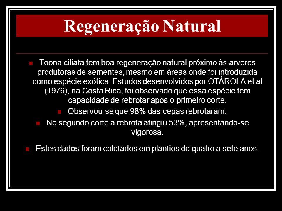 Regeneração Natural Toona ciliata tem boa regeneração natural próximo às arvores produtoras de sementes, mesmo em áreas onde foi introduzida como espé