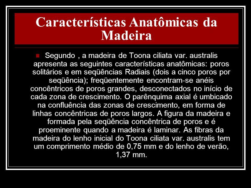 Características Anatômicas da Madeira Segundo, a madeira de Toona ciliata var. australis apresenta as seguintes características anatômicas: poros soli