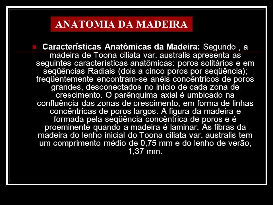 ANATOMIA DA MADEIRA Características Anatômicas da Madeira: Segundo, a madeira de Toona ciliata var. australis apresenta as seguintes características a