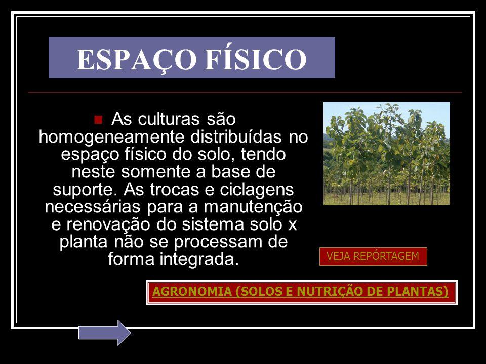 ESPAÇO FÍSICO As culturas são homogeneamente distribuídas no espaço físico do solo, tendo neste somente a base de suporte. As trocas e ciclagens neces