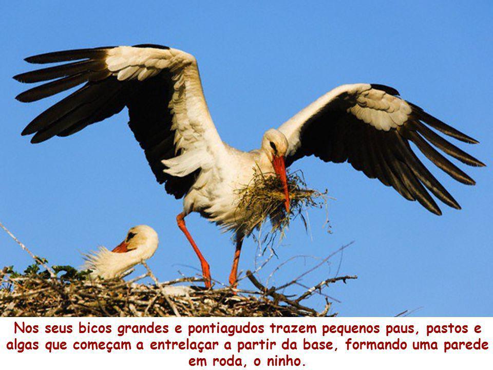 E lá foram reconstruindo o ninho, com muita dedicação, que os ventos do Outono e do Inverno haviam danificado…
