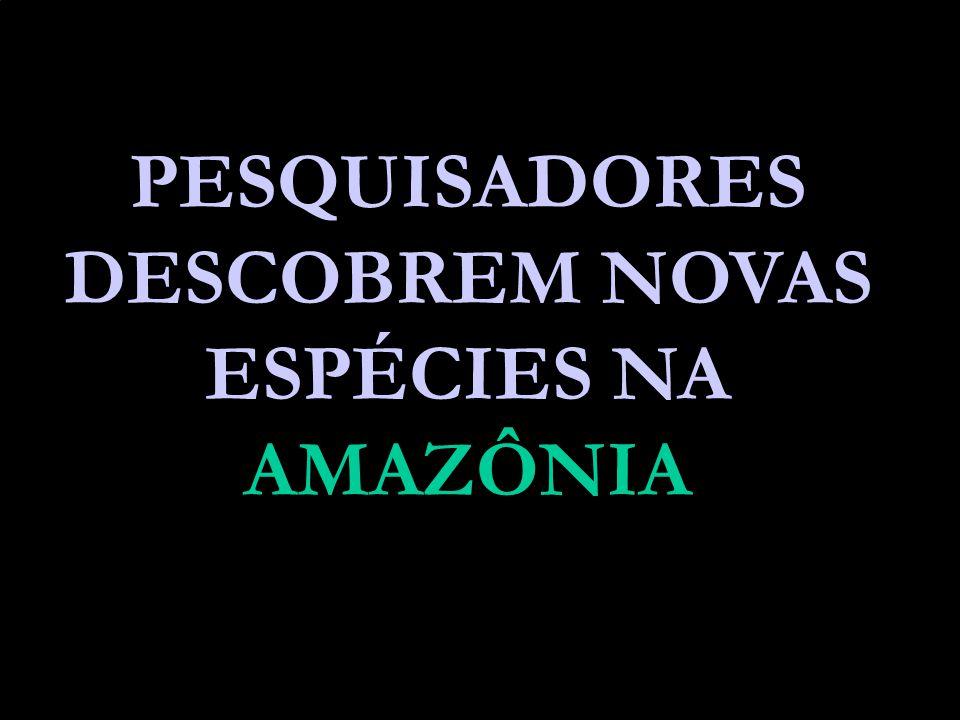 PESQUISADORES DESCOBREM NOVAS ESPÉCIES NA AMAZÔNIA