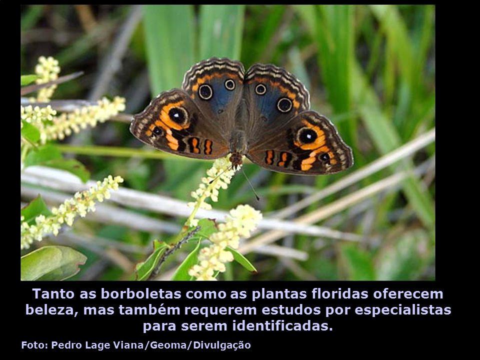 Tanto as borboletas como as plantas floridas oferecem beleza, mas também requerem estudos por especialistas para serem identificadas. Foto: Pedro Lage