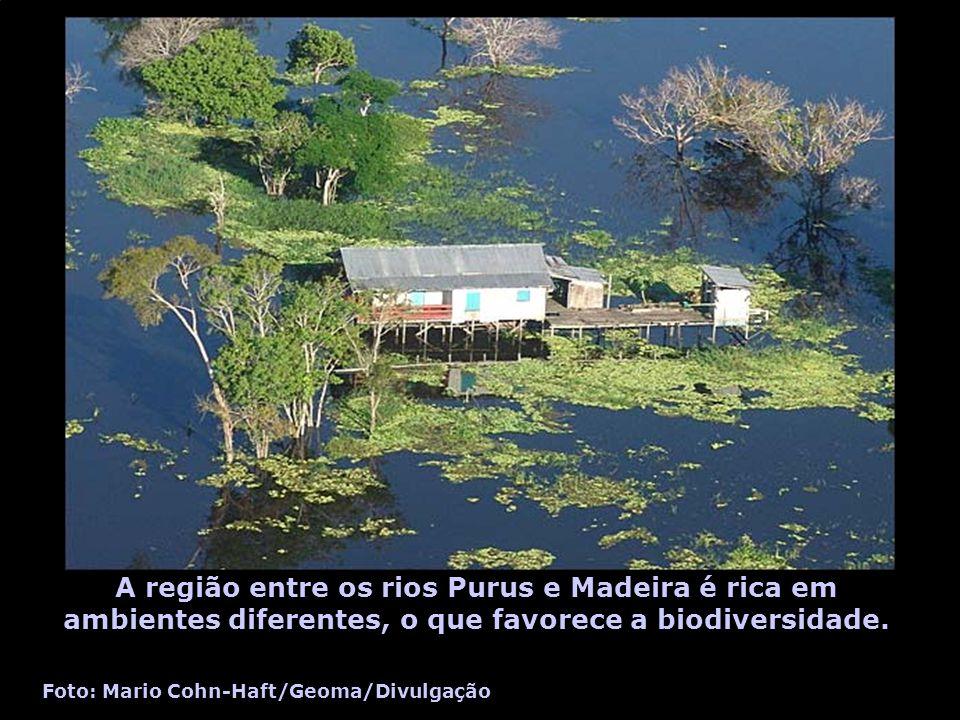 A região entre os rios Purus e Madeira é rica em ambientes diferentes, o que favorece a biodiversidade. Foto: Mario Cohn-Haft/Geoma/Divulgação