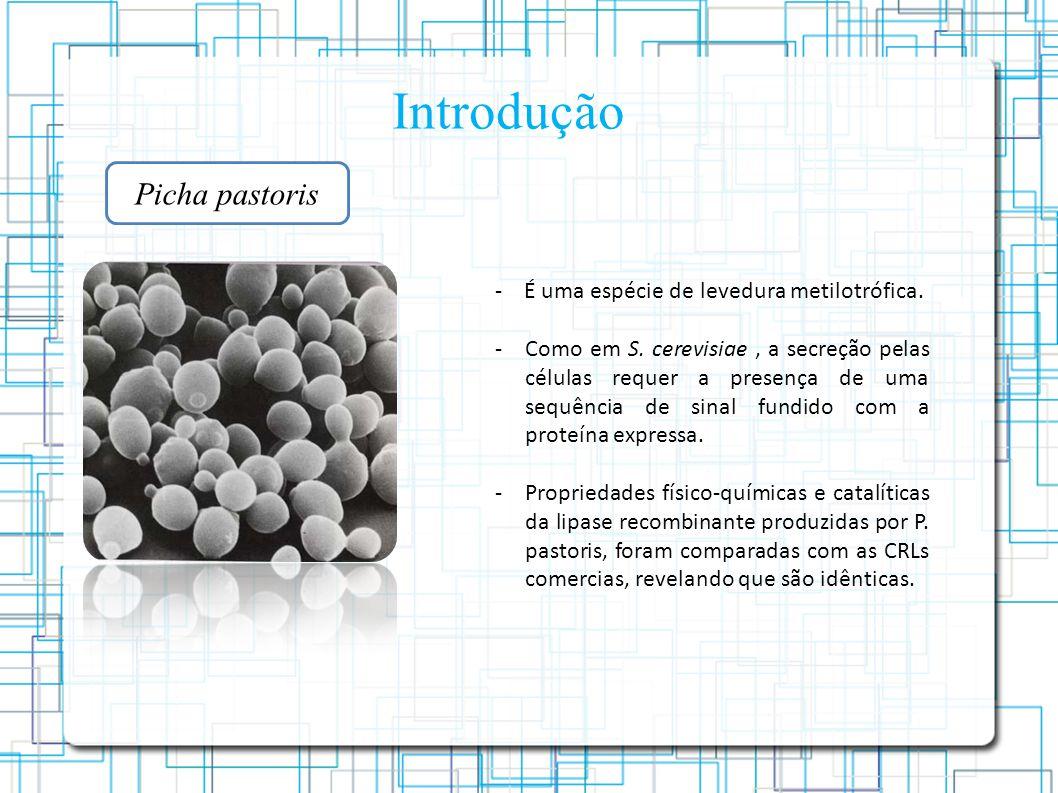 Picha pastoris - É uma espécie de levedura metilotrófica.