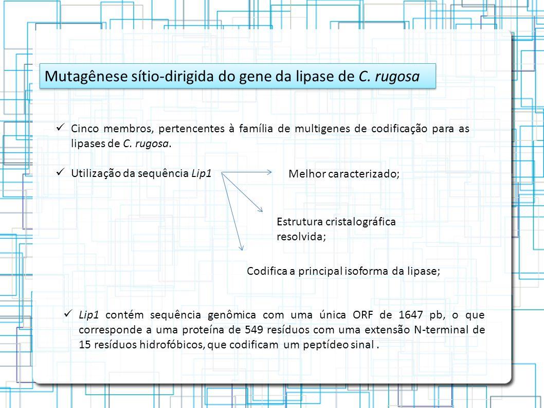 Mutagênese sítio-dirigida do gene da lipase de C.