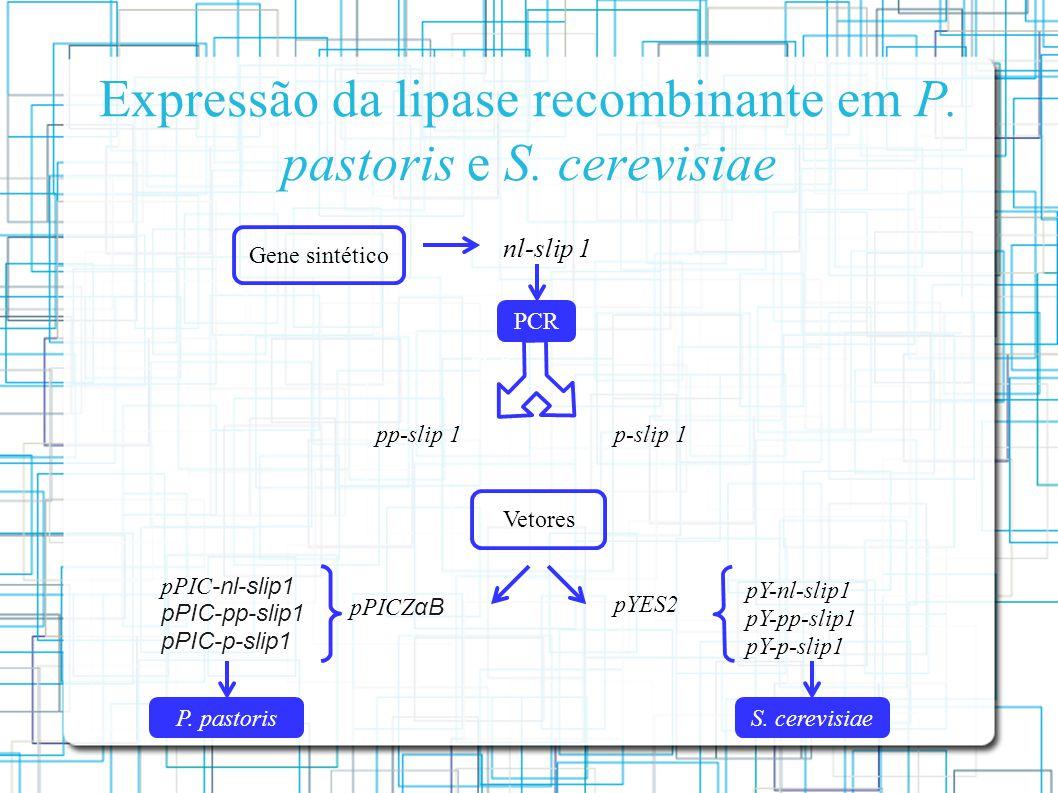 Expressão da lipase recombinante em P.pastoris e S.