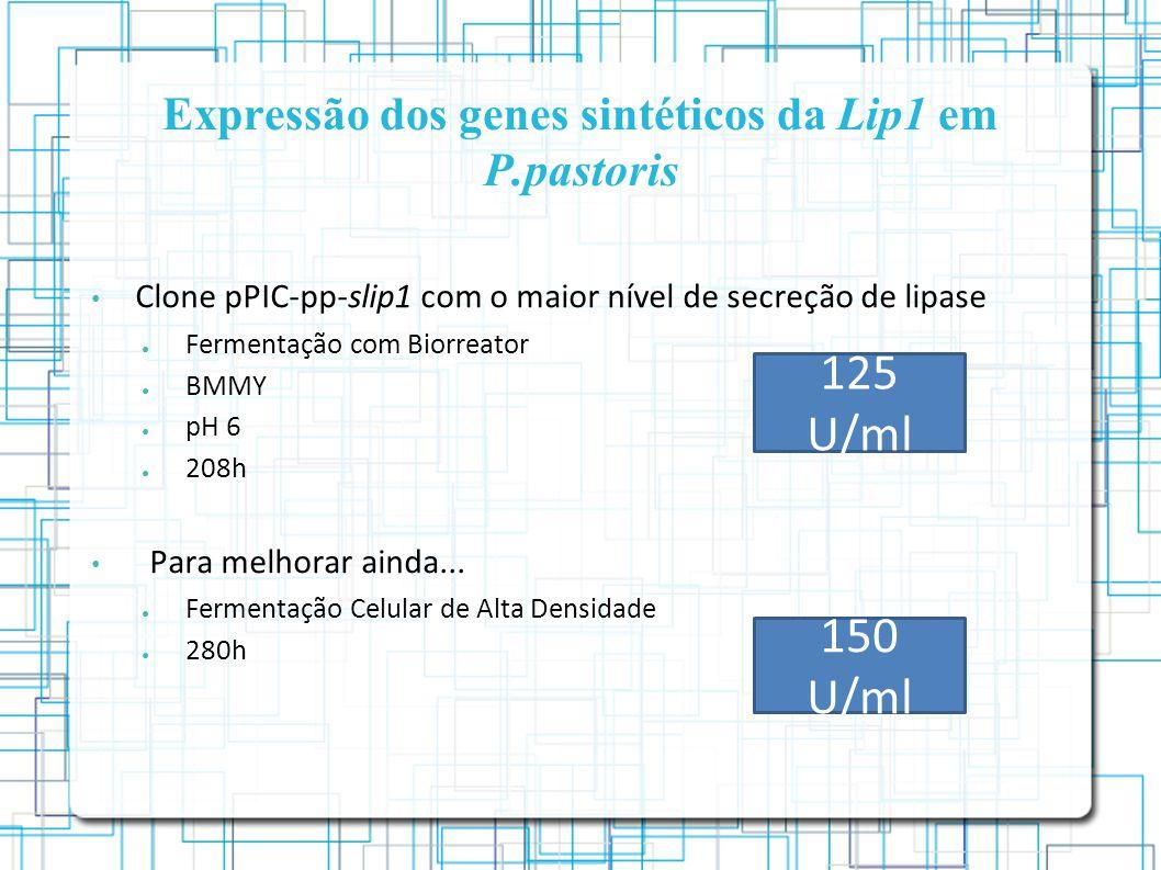 Expressão dos genes sintéticos da Lip1 em P.pastoris Clone pPIC-pp-slip1 com o maior nível de secreção de lipase Fermentação com Biorreator BMMY pH 6 208h Para melhorar ainda...