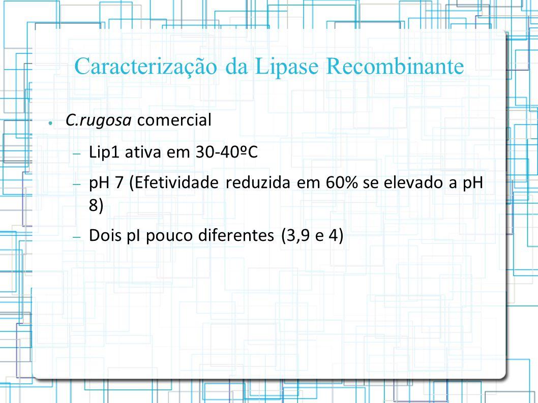 Caracterização da Lipase Recombinante C.rugosa comercial – Lip1 ativa em 30-40ºC – pH 7 (Efetividade reduzida em 60% se elevado a pH 8) – Dois pI pouco diferentes (3,9 e 4)
