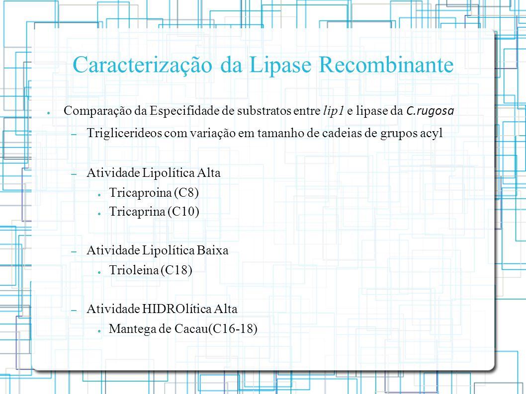Caracterização da Lipase Recombinante Comparação da Especifidade de substratos entre lip1 e lipase da C.rugosa – Triglicerideos com variação em tamanho de cadeias de grupos acyl – Atividade Lipolítica Alta Tricaproina (C8) Tricaprina (C10) – Atividade Lipolítica Baixa Trioleina (C18) – Atividade HIDROlítica Alta Mantega de Cacau(C16-18)