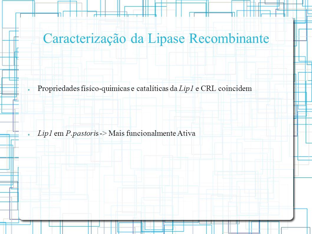 Caracterização da Lipase Recombinante Propriedades físíco-quimicas e catalíticas da Lip1 e CRL coincidem Lip1 em P.pastoris -> Mais funcionalmente Ativa