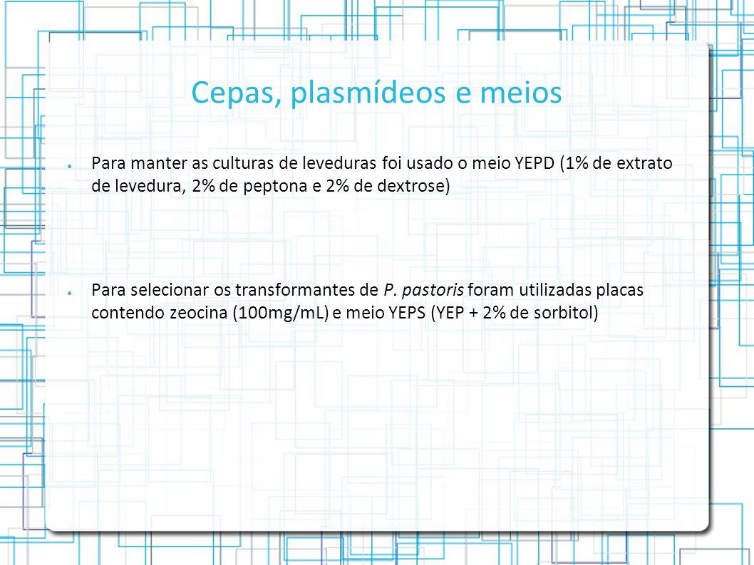 Cepas, plasmídeos e meios Para manter as culturas de leveduras foi usado o meio YEPD (1% de extrato de levedura, 2% de peptona e 2% de dextrose) Para selecionar os transformantes de P.
