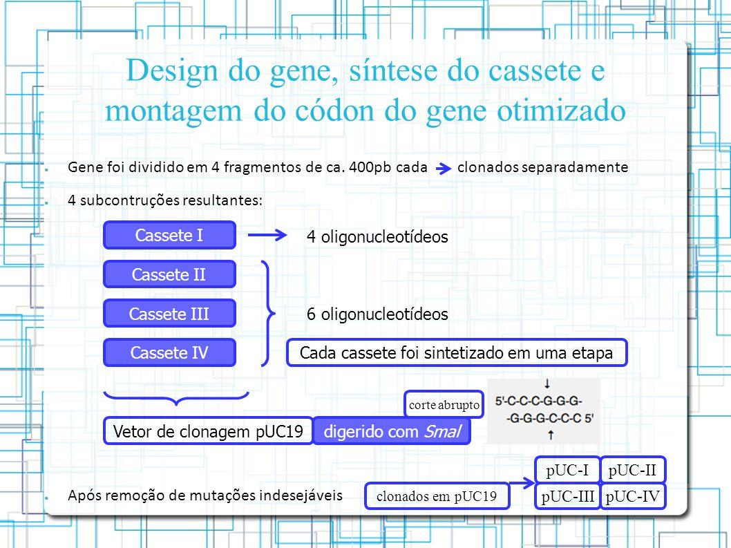 Design do gene, síntese do cassete e montagem do códon do gene otimizado Gene foi dividido em 4 fragmentos de ca.