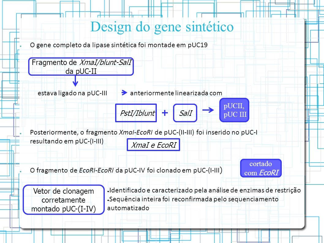 Design do gene sintético O gene completo da lipase sintética foi montade em pUC19 Posteriormente, o fragmento XmaI-EcoRI de pUC-(II-III) foi inserido no pUC-I resultando em pUC-(I-III) O fragmento de EcoRI-EcoRI da pUC-IV foi clonado em pUC-(I-III ) Fragmento de XmaI/blunt-SalI da pUC-II estava ligado na pUC-III PstI/IbluntSalI anteriormente linearizada com pUCII, pUC III cortado com EcoRI Vetor de clonagem corretamente montado pUC-(I-IV) Identificado e caracterizado pela análise de enzimas de restrição Sequência inteira foi reconfirmada pelo sequenciamento automatizado XmaI e EcoRI