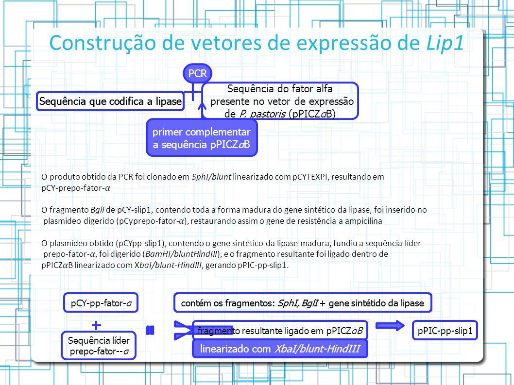 Construção de vetores de expressão de Lip1 Sequência que codifica a lipase Sequência do fator alfa presente no vetor de expressão de P.