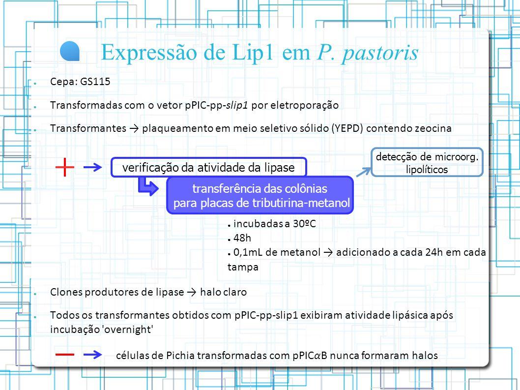 Expressão de Lip1 em P.