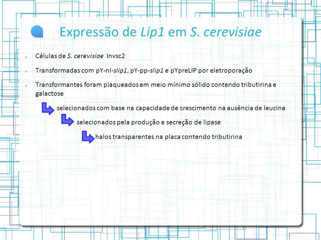 Expressão de Lip1 em S.cerevisiae Células de S.