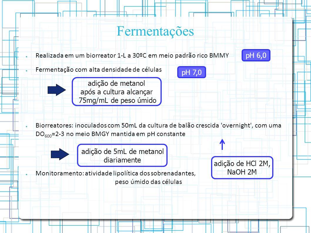 Fermentações Realizada em um biorreator 1-L a 30ºC em meio padrão rico BMMY Fermentação com alta densidade de células Biorreatores: inoculados com 50mL da cultura de balão crescida overnight , com uma DO 600 =2-3 no meio BMGY mantida em pH constante Monitoramento: atividade lipolítica dos sobrenadantes, peso úmido das células adição de HCl 2M, NaOH 2M pH 6,0 pH 7,0 adição de metanol após a cultura alcançar 75mg/mL de peso úmido adição de 5mL de metanol diariamente