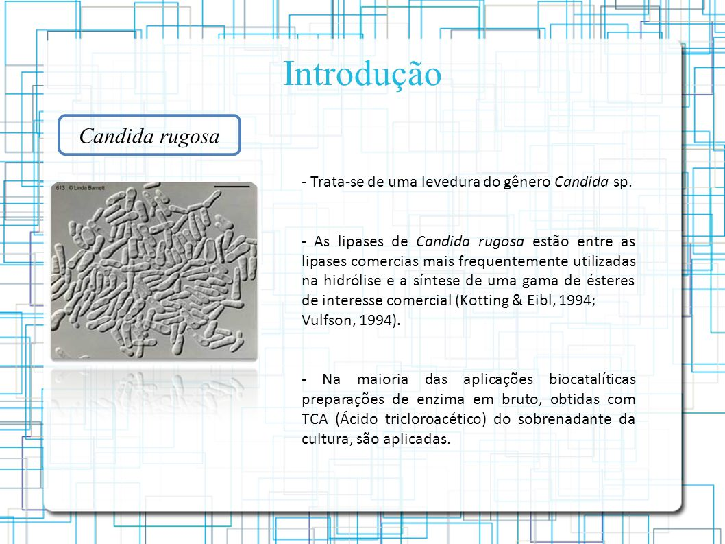 Candida rugosa - Trata-se de uma levedura do gênero Candida sp.
