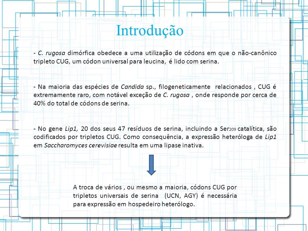 - C. rugosa dimórfica obedece a uma utilização de códons em que o não-canônico tripleto CUG, um códon universal para leucina, é lido com serina. - Na