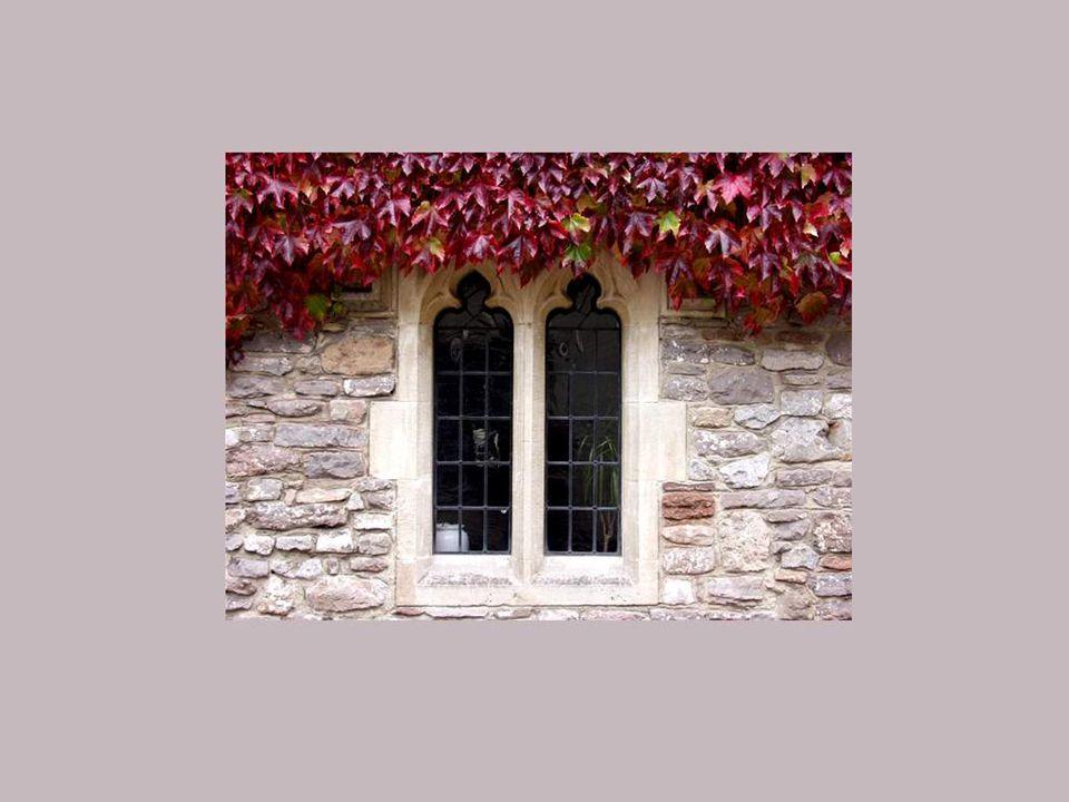Duas janelas elegantes com « cabeleiras » de heras!!!
