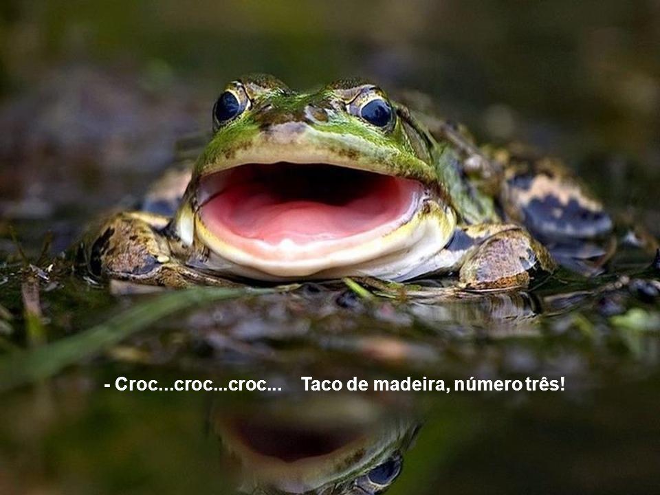 - Croc...croc...croc... Taco de madeira, número três!