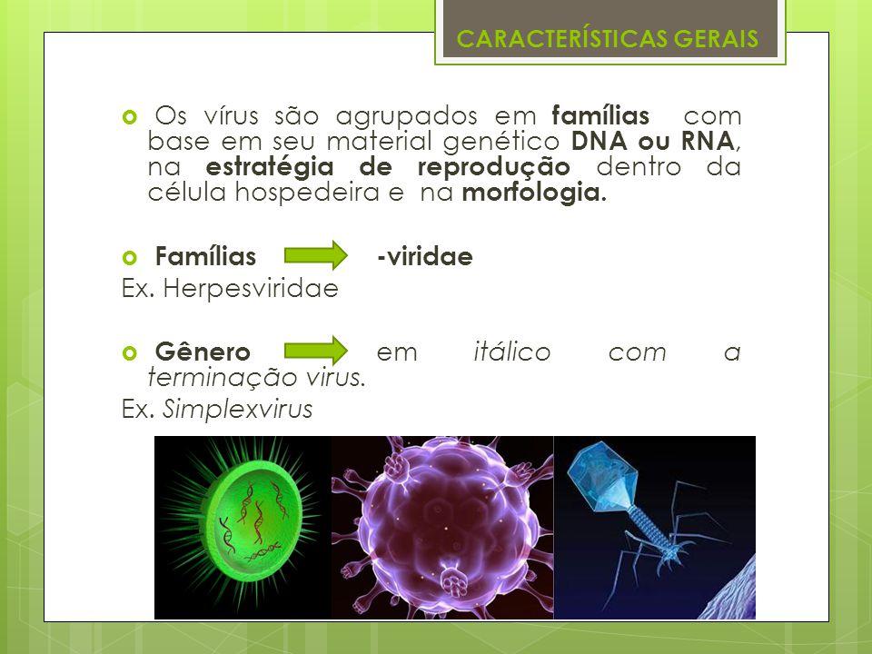 CARACTERÍSTICAS GERAIS Os vírus são agrupados em famílias com base em seu material genético DNA ou RNA, na estratégia de reprodução dentro da célula h
