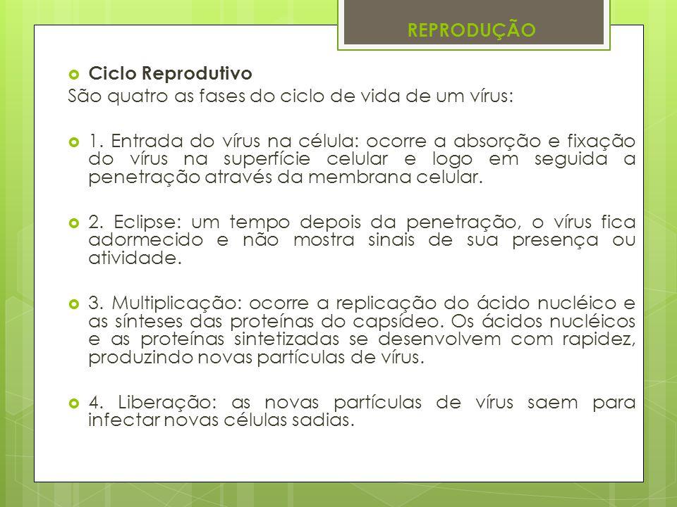 REPRODUÇÃO Ciclo Reprodutivo São quatro as fases do ciclo de vida de um vírus: 1. Entrada do vírus na célula: ocorre a absorção e fixação do vírus na